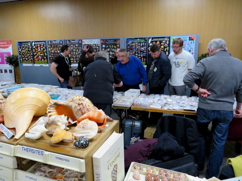 Paris 31 èmes Rencontres Internationales du Coquillage 9 & 10 Mars 2019 Img_8005