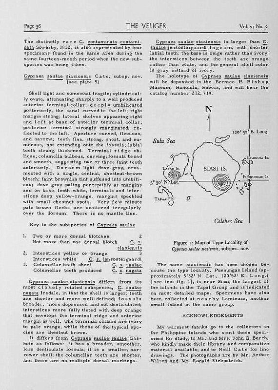 Palmadusta saulae siasiensis - (Cate, 1960) P_saulae